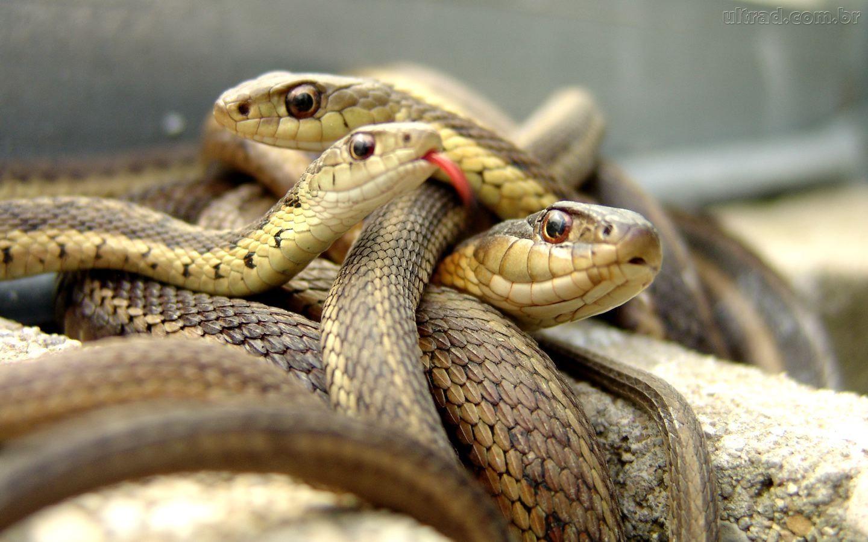 Resultado de imagen de cobras